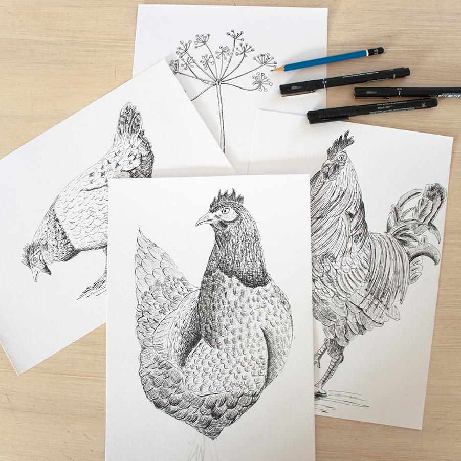 illustraties kippen plein air